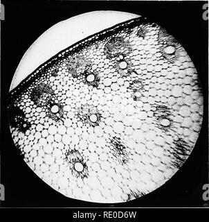 . Photo-micrographs and how to make them. Photomicrography. Fig. i.. Fig.. Please note that these images are extracted from scanned page images that may have been digitally enhanced for readability - coloration and appearance of these illustrations may not perfectly resemble the original work.. Sternberg, George Miller, 1838-1915. Boston, J. R. Osgood and company - Stock Photo