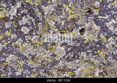Close up on concrete structure covered in white, yellow and green lichen.  Lichens come in many colors, sizes, and forms and can grow on almost any su - Stock Photo