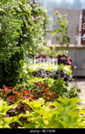 Rows of plants displayed for sale in a summertime garden center - Stock Photo