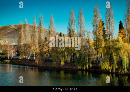Weeping willow trees on the bank of a river in Autumn - Stock Photo