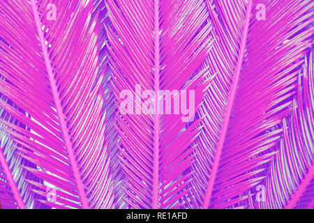 Close-up treandy pink colored tropical palm leaves as background.  - Stock Photo