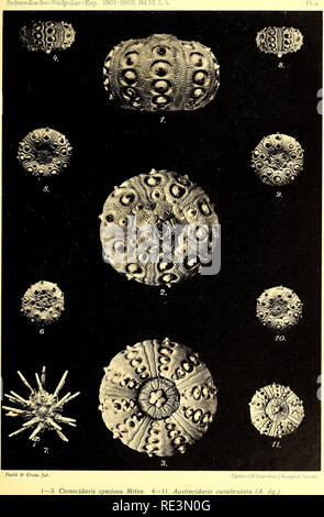 . Echinoidea of the Swedish South Polar Expedition. Sea urchins. . Please note that these images are extracted from scanned page images that may have been digitally enhanced for readability - coloration and appearance of these illustrations may not perfectly resemble the original work.. Mortensen, Th. (Theodor), 1868-1952; Svenska sydpolar-expeditionen (1901-1903). Stockholm : Lithographisches Institut des Generalstabs - Stock Photo