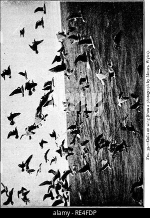 . The structure and life of birds. Birds; Evolution. VII FLIGHT 219. Please note that these images are extracted from scanned page images that may have been digitally enhanced for readability - coloration and appearance of these illustrations may not perfectly resemble the original work.. Headley, F. W. (Frederick Webb), 1856-1919. London, New York, Macmillan - Stock Photo