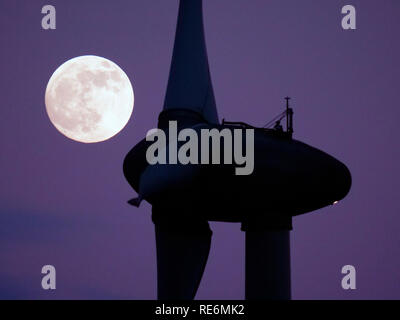 Peak District, UK. 20th Jan, 2019. Full Blood Wolf Super Moon rising over wind turbines at Griffe Grange near Wirksworth, Derbyshire Dales, Peak District, UK Credit: Doug Blane/Alamy Live News - Stock Photo