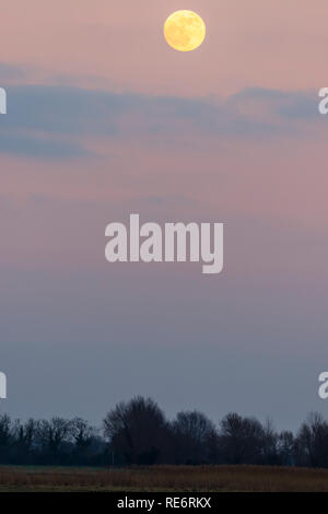 Super moon rising in a sky with scattered clouds. Evening during the blue hour just agter sunset. Treeline at bottom of frame, moon at top. - Stock Photo