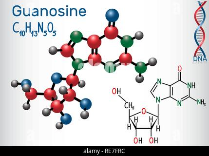Guanosine - purine nucleoside molecule, is important part of GMP, GDP, cGMP , GTP, RNA, DNA. Structural chemical formula and molecule model. Vector il - Stock Photo