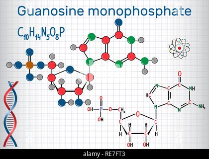 Guanosine monophosphate (GMP) molecule, monomer in RNA . Structural chemical formula and molecule model. Sheet of paper in a cage. Vector illustration - Stock Photo