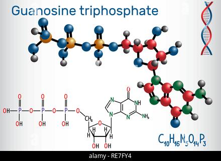 Guanosine triphosphate (GTP) molecule, it is used in synthesis of RNA and as a source of energy for protein synthesis. Structural chemical formula and - Stock Photo