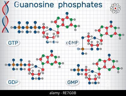 Guanosine phosphates (guanosine triphosphate, guanosine diphosphate, guanosine monophosphate, cyclic guanosine monophosphate). Sheet of paper in a cag - Stock Photo