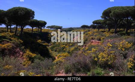 Spanien, Andalusien, Küste und Meer - Stock Photo