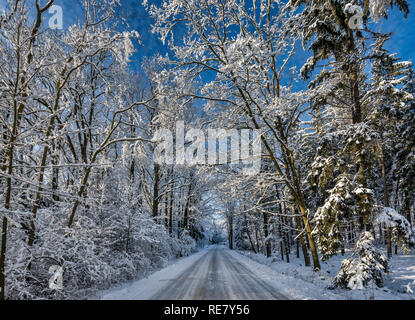 Beech trees, ice and snow encased, over local road in Kaczawskie Mountains, Western Sudetes, winter, near town of Jawor, Lower Silesia, Poland - Stock Photo