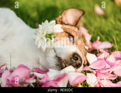 Floral concept with dog holding dahlia flower and rose petals for Valentine's day holiday - Stock Photo