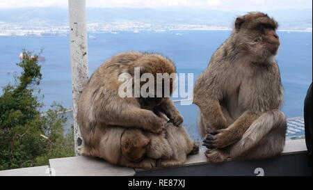 Spanien, Andalusien,Gibraltar - Stock Photo