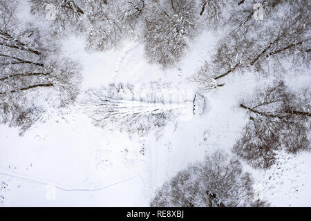 Aerial view of a beautiful Italian snowy forest with a fallen tree in the middle. Winter season in Italy. National Park of Abruzzo, Lazio and Molise. - Stock Photo