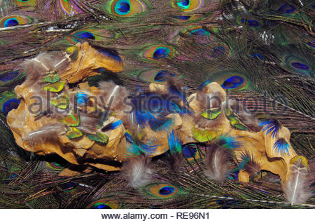 small landscape with feathers, staged on a root - Stock Photo