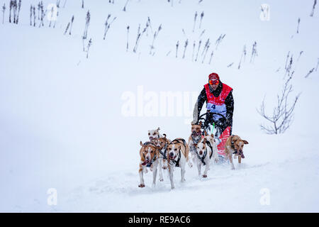 Participant in the La Grande Odyssée Savoie Mont Blanc sled dog race, Praz de Lys Sommand, Auvergne-Rhône-Alpes, France - Stock Photo