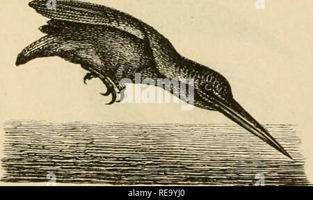 . Dyreriget : (Laerebog i zoologien, nr. 1). Zoology. 5tg. 165.  )otoeb af 9?atrabn.. Please note that these images are extracted from scanned page images that may have been digitally enhanced for readability - coloration and appearance of these illustrations may not perfectly resemble the original work.. Lütken, Chr. Fr. (Christian Frederik), 1827-1901. Kjøbenhavn : Gyldendalske (F. Hegel) - Stock Photo