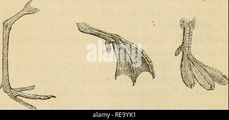 . Dyreriget : (Laerebog i zoologien, nr. 1). Zoology. 130. %ot af SSibe. gig. 131. ?ltib gig. 132. i!a^^3eb^ffer.. Please note that these images are extracted from scanned page images that may have been digitally enhanced for readability - coloration and appearance of these illustrations may not perfectly resemble the original work.. Lütken, Chr. Fr. (Christian Frederik), 1827-1901. Kjøbenhavn : Gyldendalske (F. Hegel) - Stock Photo
