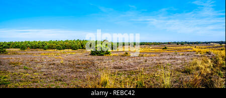 Panorama view of the heather fields and forests in the Hoge Veluwe nature reserve in Gelderland province in Netherlands - Stock Photo