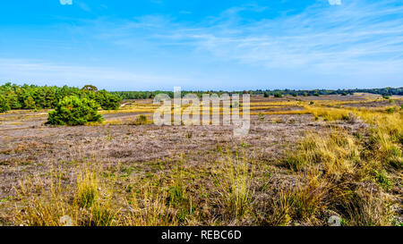 Biking through the heather fields and forests in the Hoge Veluwe nature reserve in Gelderland province in Netherlands - Stock Photo