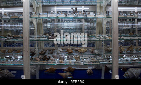 A photo of scientific exhibition of invertebrates (seashells and insects) at the La Salle Natural History Museum in San Jose, Costa Rica - Stock Photo