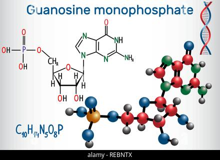 Guanosine monophosphate (GMP) molecule, it is an ester of phosphoric acid with the nucleoside guanosine, monomer in RNA . Structural chemical formula  - Stock Photo