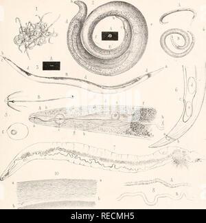 . Comptes rendus des séances de la Société de Biologie et de ses filiales ... PI.II. ^VJV..C^^-^ â -r^rmnrrr-'- 11  lUUt^ â WS. Please note that these images are extracted from scanned page images that may have been digitally enhanced for readability - coloration and appearance of these illustrations may not perfectly resemble the original work.. Société de Biologie. Paris : Masson - Stock Photo