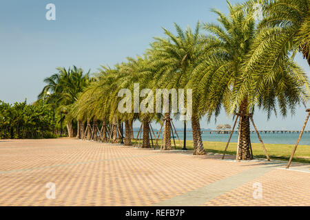 palm alley on the coast of the Gulf of Siam, beautiful landscape Thailand - Stock Photo