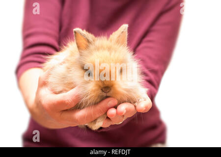 Woman holding small rabbit isolated on white - Stock Photo