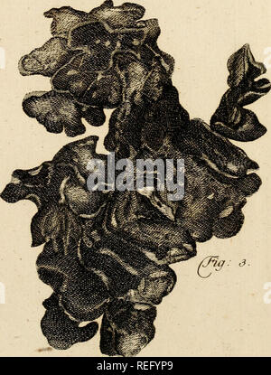 . Commentarii Academiae scientiarum imperialis Petropolitanae. . Please note that these images are extracted from scanned page images that may have been digitally enhanced for readability - coloration and appearance of these illustrations may not perfectly resemble the original work.. Imperatorskaia akademia nauk (Russia). Petropolis, Typis Academiae - Stock Photo