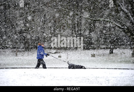 Haslingden in East Lancashire, UK. 22nd January, 2019. Heavy snow showers in the town of Haslingden in East Lancashire. The icy blast is expected to last for 48 hours with more snow forecast in the North West of England. A dog walker braves the elements in Victoria Park, Haslingden. Picture by Paul Heyes, Tuesday January 22, 2019. Credit: Paul Heyes/Alamy Live News - Stock Photo