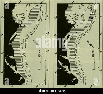 . Commercial fisheries review. Fisheries; Fish trade. 45. Fig. 3 - The geographic distribution of surf clams off northeast- em coast of United States. Crosshatching marks area where sea clams have been collected. Circles and dots show locations where sea-floor photographs revealed surf clam shells. SEA SCALLOP Atlantic Deep-Sea Scallop Deep-Sea Scallop, Giant Scallop The sea scallop, Placopecten magellanicus Gmelin, occurs along the North American coast from the Gulf of St. Lawrence to Cape Hatteras, N. C,, and is taken commercially by both United States and Canadian fishermen. This fishery be - Stock Photo