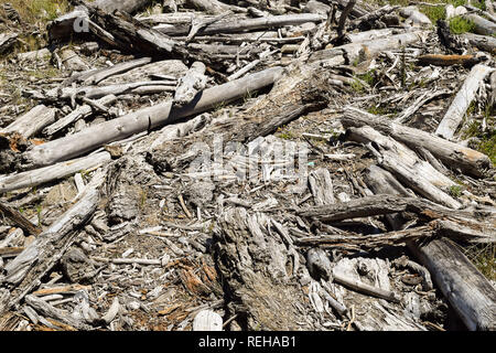 Driftwood patterned the sandy shore in Tolaga Bay, New Zealand - Stock Photo