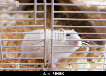 A hamster in a cage trying shyly to get free Stock Photo: 232722111