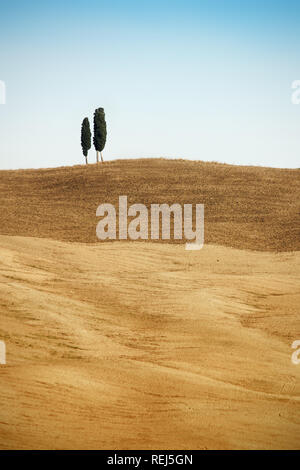 Two cypress trees on the top of the hill in Tuscany - Stock Photo