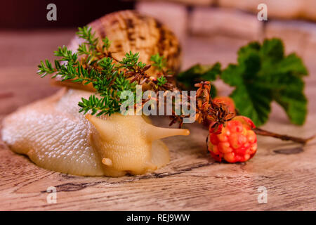 Yellow big achatina snail and cloudberry on a surface - Stock Photo