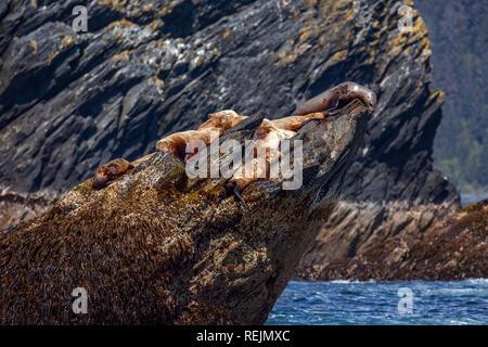 Stellar Sea Lions soak up the sun on one of the rocky islands of Procession Rocks. Gulf of Alaska, Port Bainbridge, Alaska - Stock Photo