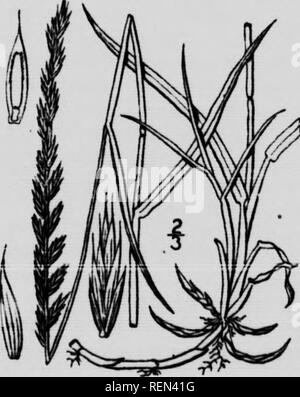 . Farm weeds and how to control them [microform]. Weeds; Botanique; Mauvaises herbes; Botany. A perennial natJve plant less than a foot m height but having tough spreading under- ground stems. Its flowers are small and not eonjpicuous, hanging short stalked in axils of the upper leaves. Leaves are rough nar- row and about an inch in length. This weed has been found very diflicult to eradicate and needs weU directed persistent efforts with riiarp unplements. In cultivated land It 18 first noticed around the edges of drj- sloughs or low fences, but soon spreads to the adjoining cultivated upland - Stock Photo