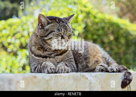 Close up portrait of sleeping cute brown tabby cat. Tabby cat lying outdoor. Gray street striped kitten outside. Adorable small cat. Gray tabby cute k - Stock Photo