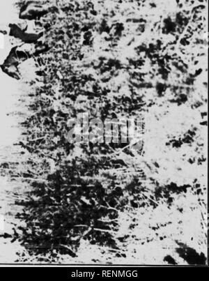 . Report on timber conditions around Lesser Slave Lake [microform]. Forest protection; Forests and forestry; Forêts; Forêts et sylviculture. »• «J -• f 4-* •. 3 -4 i 43. Please note that these images are extracted from scanned page images that may have been digitally enhanced for readability - coloration and appearance of these illustrations may not perfectly resemble the original work.. Cameron, D. Roy, b. 1888; Canada. Forestry Branch. Ottawa : Govt. Print. Bureau Stock Photo