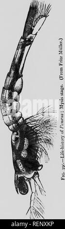. The study of animal life [microform]. Zoology; Zoologie. 202 The Study of Animal Life part m One must l)c careful not to press the idea of recapitulation too far, (i) because the individual life-history tends to skip stages which occurred in the an- cestral progress; (2) because the young animal may acquire new- characters which are peculiar to its own near lineage and have little or no importance in connec- tion with the general evolution of its race ; (3) because, in short, the resemblance between the indi- vidual and raciul history (so far as we know them) is general, not precise. Thus we - Stock Photo