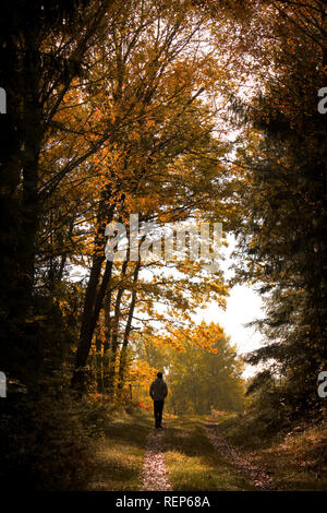 An idyllic autumn walk in the outskirts of Stockholm - Stock Photo