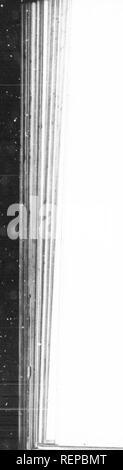 . Voyages et découvertes outre mer au XIXe siècle [microforme]. Amérique; Expéditions scientifiques; Scientific expeditions. IIIJ voVAGii;- lir i)i;oii |.;i(riis rnplora.ent de ,a DivinUc ie re,..ur de leur rnère. Toujours â¢Ã©tourdissant ganielong. Danso guerrière par huit chenapans brandissant leurs armes. Encore l'effroyable gamelong Â« Dans la cour même musique. Des masques hideux à med et a cheval, circulent dans la foule Un prêtre musulman ^e met u pousser des hurk.nents lamentables sur des cendres brûlantes, prés d'une masse de charbons ardents; quelques ma heureu.x y sautent - Stock Photo