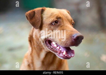 Beautiful homeless mongrel dog, Close-up portrait. - Stock Photo
