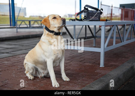 The customs dog for looking drugs and weapons on border-line - Stock Photo