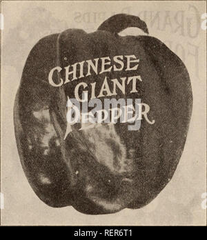 . Dreer's wholesale price list / Henry A. Dreer.. Nursery Catalogue. HENRY A. DREER, PHILADELPHIA, PA., WHOLESALE PRICE LIST. PEPPER. oz. >4=ib. Lb. Chinese Giant. '/2-0Z., 20 cts.. 35 $125 $4 00 Hot Bell 30 80 3 00 Giant Crimson 35 1 25 4 00 Large Bell or Bull Nose 20 60 2 00 Lartce Sweet Spanish 20 60 2 00 Ruby King 25 75 2 25 Long Red Cayenne 20 60 2 00 PEAS. // by mail, add 15 cetits per ijiiavt By Express or Freight. Ot. 4 Ots. Pk. Bush. Dreer's Extra Early Electric .... 30 $1 00 $1 60 $6 40 Oreer's Eureka Extra Early 30 1 00 1 60 6 40 Gradus, or Prosperity 35 1 20 2 25 9 00 Thomas Lax - Stock Photo