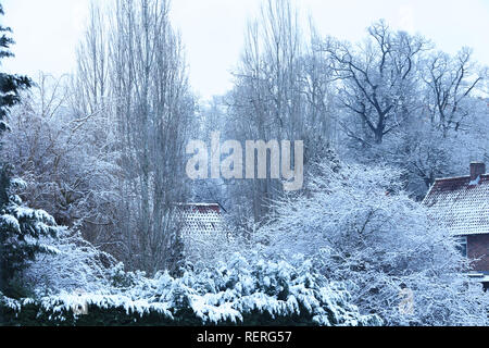 London, UK. 23rd January 2019. Trees, shrubs and roofs covered with snow in Mill Hill, London, UK, early morning. Credit: Joe Kuis / Alamy Live News - Stock Photo