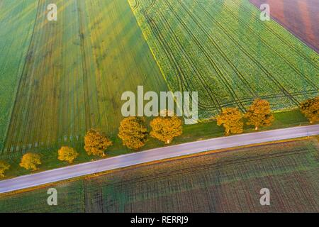 Country road with row of trees at sunrise, near Dietramszell, drone view, Upper Bavaria, Bavaria, Germany - Stock Photo