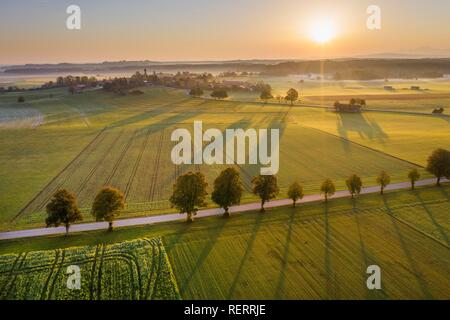 Country road with tree row at sunrise, punching at Dietramszell, drone view, Tölzer Land, Upper Bavaria, Bavaria, Germany - Stock Photo