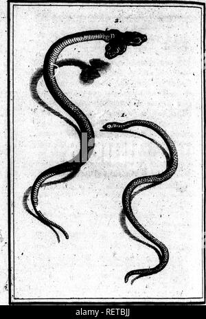 ". Histoire naturelle des quadrupèdes ovipares et des serpens [microforme]. Reptiles; Serpents; Reptiles; Snakes. r 1. A : , ' -j -, y r*v - â ' ^::^»':''"" .V. Please note that these images are extracted from scanned page images that may have been digitally enhanced for readability - coloration and appearance of these illustrations may not perfectly resemble the original work.. Lacépède, Bernard Germain Ãtienne de La Ville sur Illon, comte de, 1756-1825. A Paris : Hôtel de Thou . .. - Stock Photo"